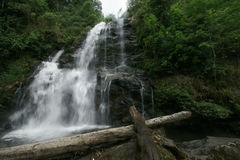 Natural water fall in Jungle Royalty Free Stock Photos