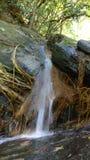 Natural water flow kakkayam kerala. Forest natural water flow kakkayam kerala india Royalty Free Stock Image
