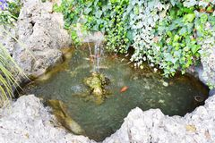 Natural water fountain and fish Royalty Free Stock Image