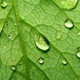Natural waterdrop Stock Photography