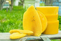 Natural wax in honeycombs and in round forms. Beekeeping work on the apiary. Selective focus. H. Orizontal frame stock photo