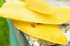 Natural wax in honeycombs and in round forms. Beekeeping work on the apiary. Selective focus. H. Orizontal frame royalty free stock images