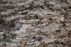 Natural Weathered Grey Taupe Brown Cut Tree Stump Texture, Large Horizontal Detailed Wounded Damaged Vandalized Gray Background. Natural Weathered Grey Taupe Stock Image