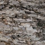 Natural Weathered Grey Taupe Brown Cut Tree Stump Texture, Large Horizontal Detailed Wounded Damaged Vandalized Gray Lumber. Background Wood Macro Closeup, Dark Stock Photo