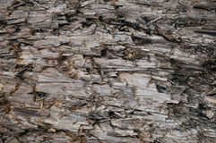 Natural Weathered Grey Taupe Brown Cut Tree Stump Texture, Large Horizontal Detailed Wounded Damaged Vandalized Gray Lumber. Background Wood Macro Closeup, Dark Stock Images