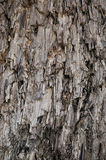 Natural Weathered Grey Taupe Brown Cut Tree Stump Texture Large Vertical Detailed Wounded Damaged Vandalized Lumber Background. Natural Weathered Grey Taupe Royalty Free Stock Photography