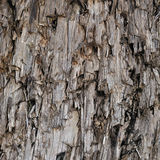 Natural Weathered Grey Taupe Brown Cut Tree Stump Texture Large Vertical Detailed Wounded Damaged Vandalized Lumber Background. Natural Weathered Grey Taupe Stock Photography