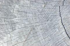 Natural Weathered Grey Tree Stump Cut Texture, Large Detailed Horizontal Background Pattern. Natural Weathered Grey Tree Stump Cut Texture Large Detailed Royalty Free Stock Photos