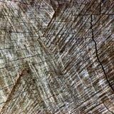 Natural Weathered Grey Tree Stump Cut Texture, Large Detailed Old Aged Gray Lumber Background Horizontal Macro Closeup, Dark Black. Textured Cracked Pattern Stock Photo
