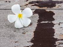 Natural weathered wooden plank background and flower Stock Photos