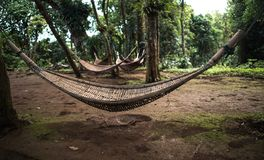 Natural weave hammock in forest. Natural weave hammock under the tree hanging in forest Stock Image