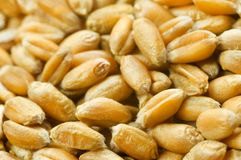 Wheat Grains background Royalty Free Stock Image
