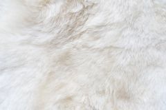 Natural white fur background, design template, place for text. Natural white fur background, design template, copy space Royalty Free Stock Image