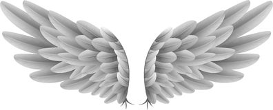 Natural white goose wings with background Royalty Free Stock Photo