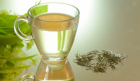 Natural white tea. The importance and benefits of herbal tea are known in the world of Alternative Medicine royalty free stock photos