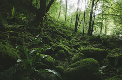 Natural wild green forest with moss Royalty Free Stock Images