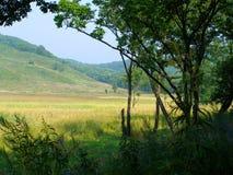 Free Natural Window Royalty Free Stock Image - 2063406