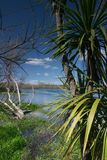 Natural window. A look through to a river with blue sky and a cloud. On the right side new-zealands famous cabbage tree stock images