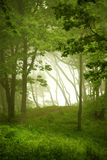 Natural window, forest frame Royalty Free Stock Photos