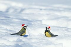 Natural winter background with beautiful funny Birds tits in th stock image