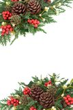 Natural Winter Background Border. With holly, mistletoe, juniper and cedar cypress leaf sprigs, ivy and pine cones on white Stock Photos