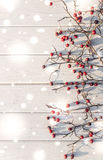 Natural winter background. Red hawthorn and white wood Stock Photos