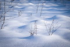 Natural winter landscape background on a frosty day.  royalty free stock photo