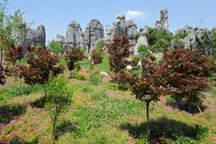 Natural wonders of China (stone forest) Stock Images