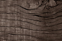 Natural Wood Background sepia Stock Photography