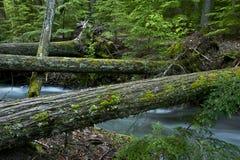Natural Wood Bridges Royalty Free Stock Images