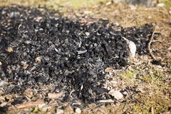 Natural wood charcoal biomass for energy royalty free stock photos