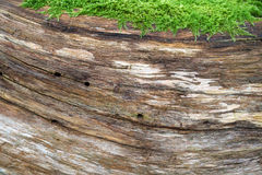 Natural wood structure with moss Royalty Free Stock Photos