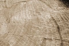 Natural wood texture Stock Images