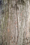 Natural Wood Texture Background Royalty Free Stock Image