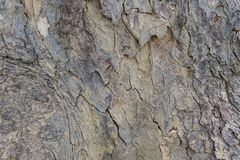 Natural wood texture. Bark of tree. Wood Texture. Texture of tree bark. Brown tileable texture of the old tree. stock photos