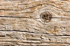 Natural wood texture closeup Royalty Free Stock Photo