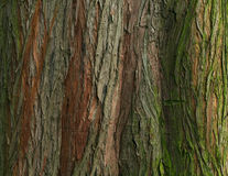 Natural wood texture Royalty Free Stock Photography