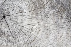Natural wood texture. Tree circles cut. Gray timber with weathered crack lines. Natural background for shabby chic design. Grey wooden board image. Aged tree Royalty Free Stock Photography
