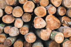 Natural wooden background Stock Photos