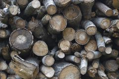 Natural wooden background. Firewood stacked and prepared for win Stock Images