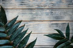 Natural wooden background green leaf decor branch royalty free stock images