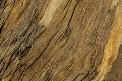Natural wooden background, texture of tree bark. Horizontal natural wooden background. Surface of a thick tree trunk, inclined texture of tree bark Royalty Free Stock Photos