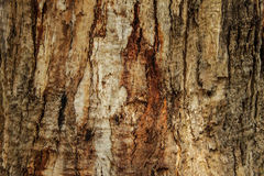 Natural wooden background, texture of tree bark Stock Images