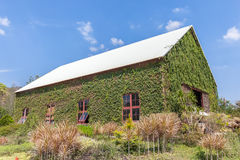 Natural wooden barn with green plant exterior wall in agricultur Stock Photography