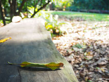 Natural wooden bench in the garden with mango leaves under sunli. Natural wooden bench in the tropical garden with mango leaves under sunlight through mango Stock Photo