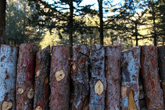 Natural wooden fence of rough pieces of wood and forest on backg. Round royalty free stock photo