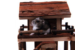Natural wooden house toy with dzungarian hamster. Isolated on the white background Stock Photography