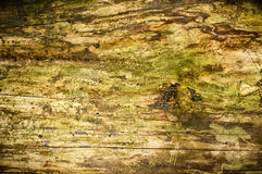 Natural wooden surface Royalty Free Stock Photo