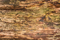Natural wooden surface Stock Photo