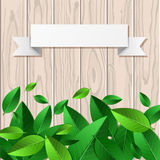 Natural wooden texture background, green leaves and white paper Stock Image